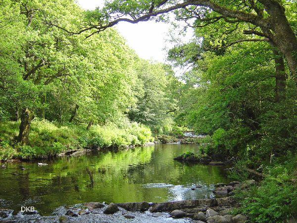 Summers day Holne, Dartmoor