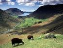 Herdwick sheep & Wast Water
