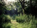 Alder carr woodland