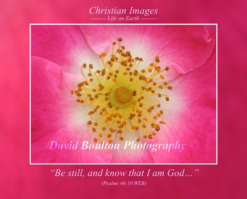 """""""Be still, and know that I am God…"""" (Psalms 46:10 WEB)"""