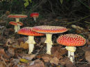 Images of Fungi