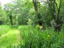 Alder carr woodland & Irises