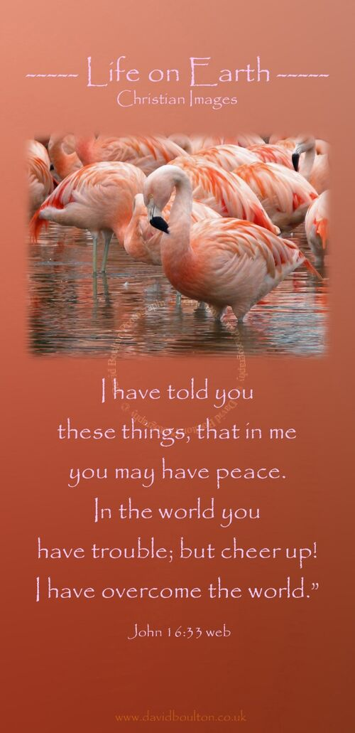 """I have told you these things, that in me you may have peace. In the world you have trouble; but cheer up! I have overcome the world."""" (John 16:33 WEB)"""