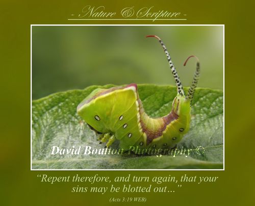 """""""Repent therefore, and turn again, that your sins may be blotted out…"""" (Acts 3:19 WEB)"""