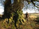 Huge Beech tree
