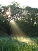Shafts of morning sunlight