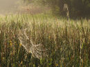 Spiders webs and morning dew