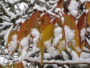 Autumn leaves & snow