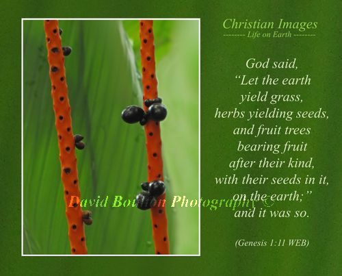 """God said, """"Let the earth yield grass, herbs yielding seeds, and fruit trees bearing fruit after their kind, with their seeds in it, on the earth;"""" and it was so. (Genesis 1:11 WEB)"""