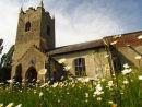 Churchyard & ox eye daisies