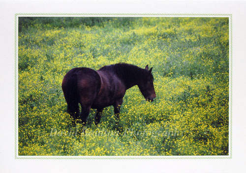 Horse in buttercups, Old Catton, Norwich