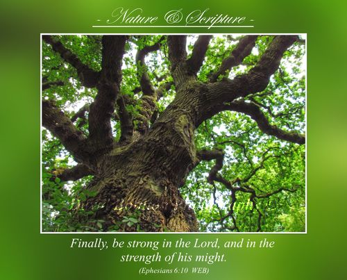 Finally, be strong in the Lord, and in the strength of his might. (Ephesians 6.10 WEB)
