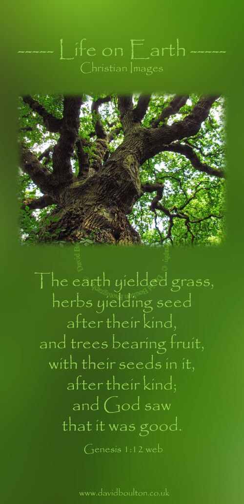 The earth yielded grass, herbs yielding seed after their kind, and trees bearing fruit, with their seeds in it, after their kind; and God saw that it was good. (Genesis 1:12 WEB)