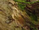 Dead wood & mosses