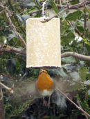 Robin trying to get onto fat feeder!