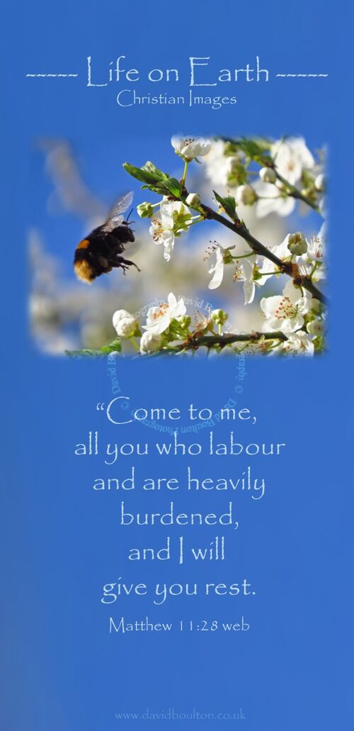"""Come to me, all you who labor and are heavily burdened, and I will give you rest. (Matthew 11:28 WEB)"