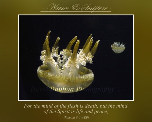 For the mind of the flesh is death, but the mind of the Spirit is life and peace;