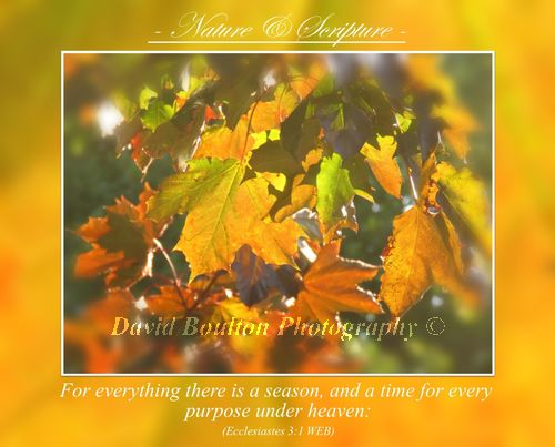 For everything there is a season, and a time for every purpose under heaven: Ecclesiastes 3.1 WEB