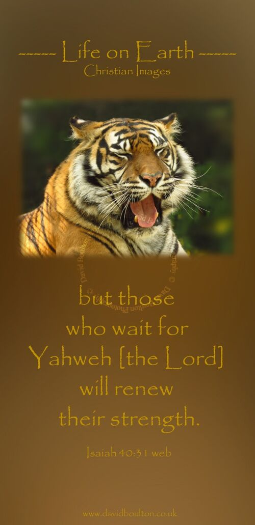 but those who wait for Yahweh will renew their strength. (Isaiah 40:31 WEB)