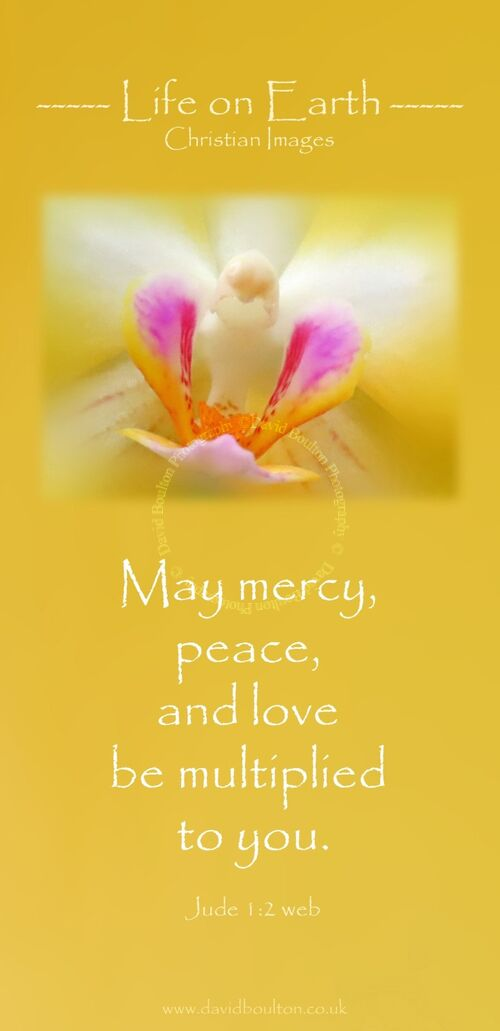 May mercy, peace, and love be multiplied to you. (Jude 1:2 WEB)