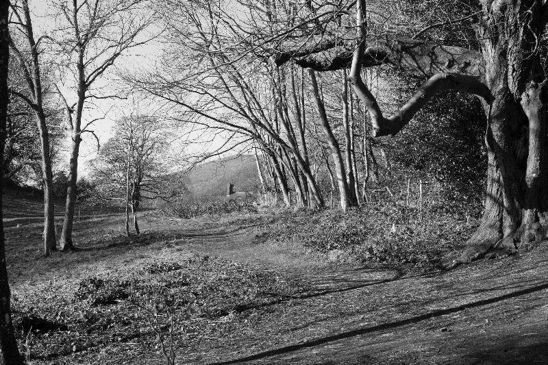 Black & White (4)