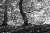 Black & White (9)