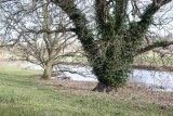 Attingham Park 5