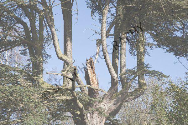 Attingham Park (10)