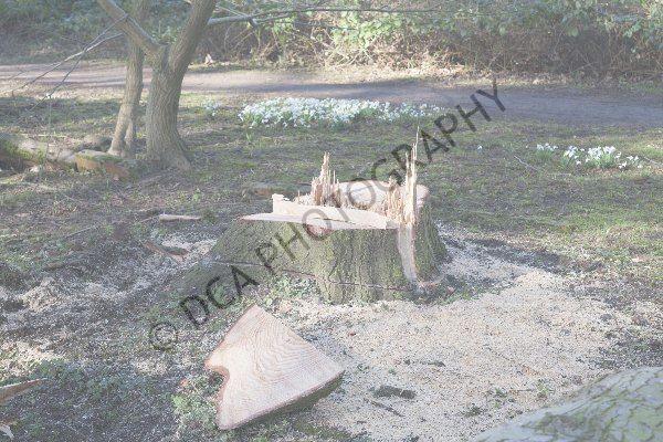 Attingham Park (13)