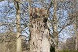 Attingham Park 7