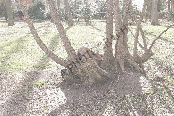 Attingham Park (17)
