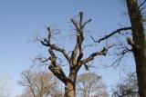 Attingham Park 10