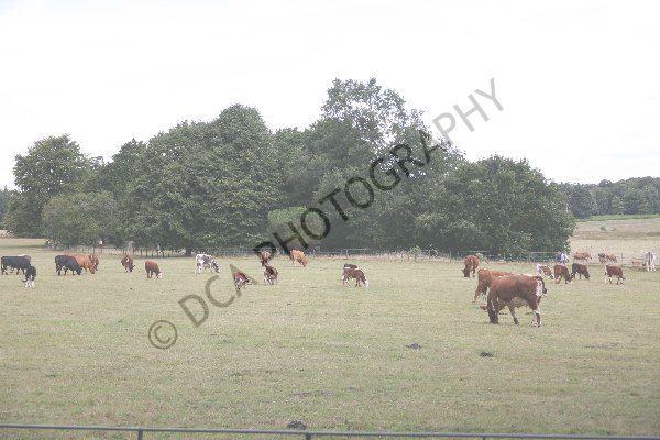 Attingham Park (26)
