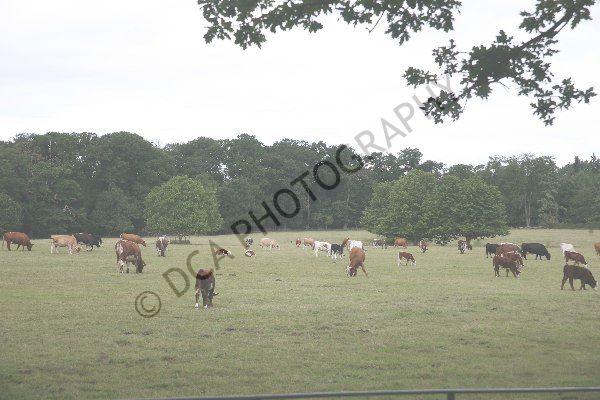 Attingham Park (27)