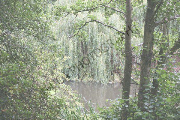 Attingham Park (29)