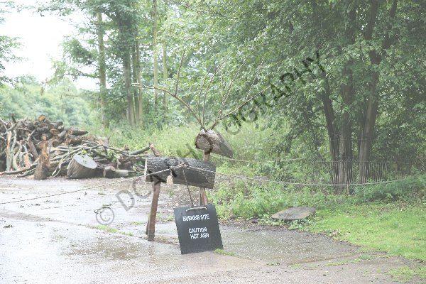 Attingham Park (31)