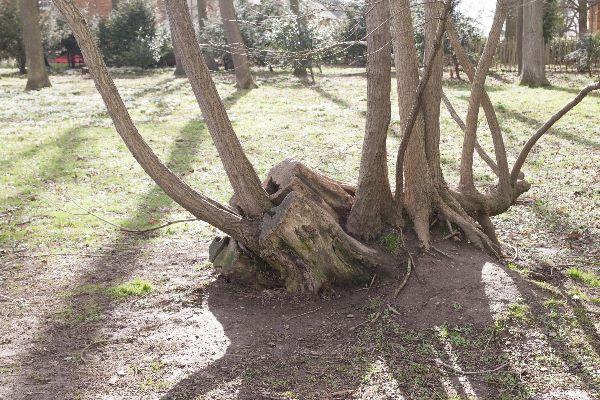 Attingham Park 19