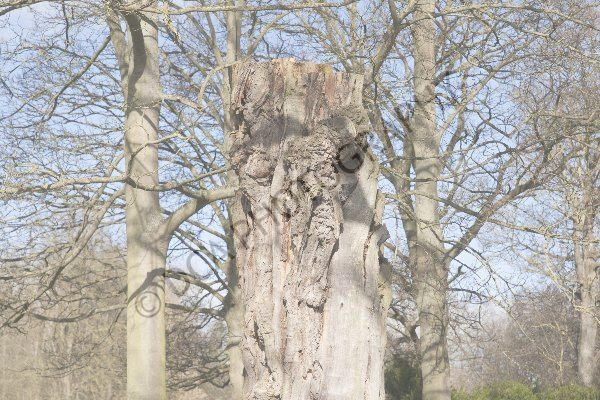 Attingham Park (8)