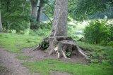 Attingham Park 30
