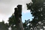Attingham Park 28