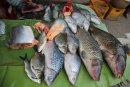 Luang Prabang fish market