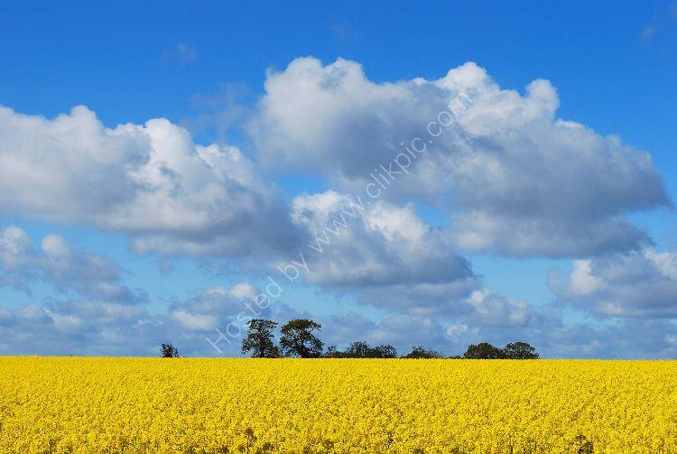 Yellow Landscape 02