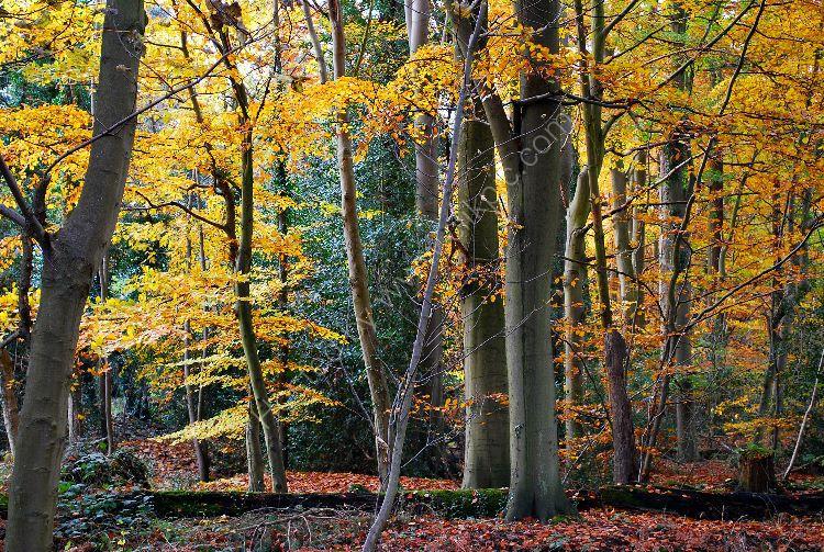 Autumn Trees 01