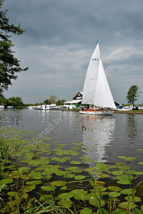 Three Rivers Race Horning