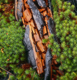 Burnt Wood & Sphagnum Moss on Rannoch Moor