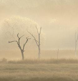 Bunny Meadows, Warsash