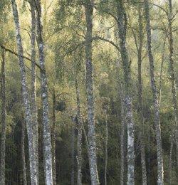 Woodland near Spean Bridge