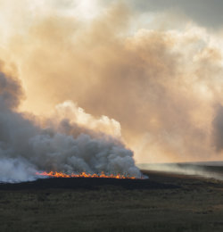 Burning Nought Moor