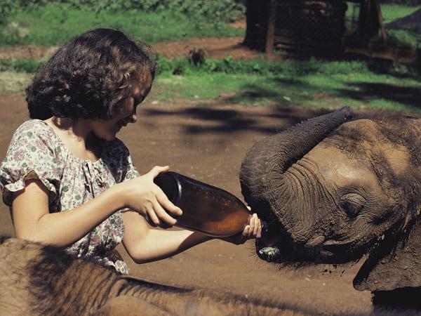 Bottle feeding a baby elephant