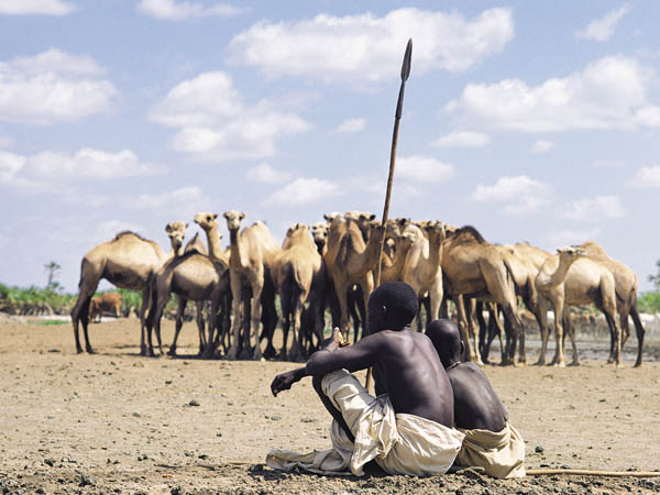Camels at a waterhole